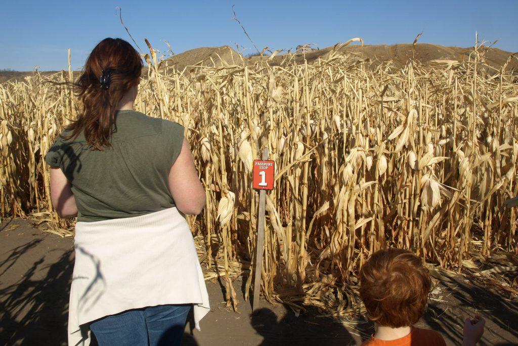 Two kids walking through corn maze