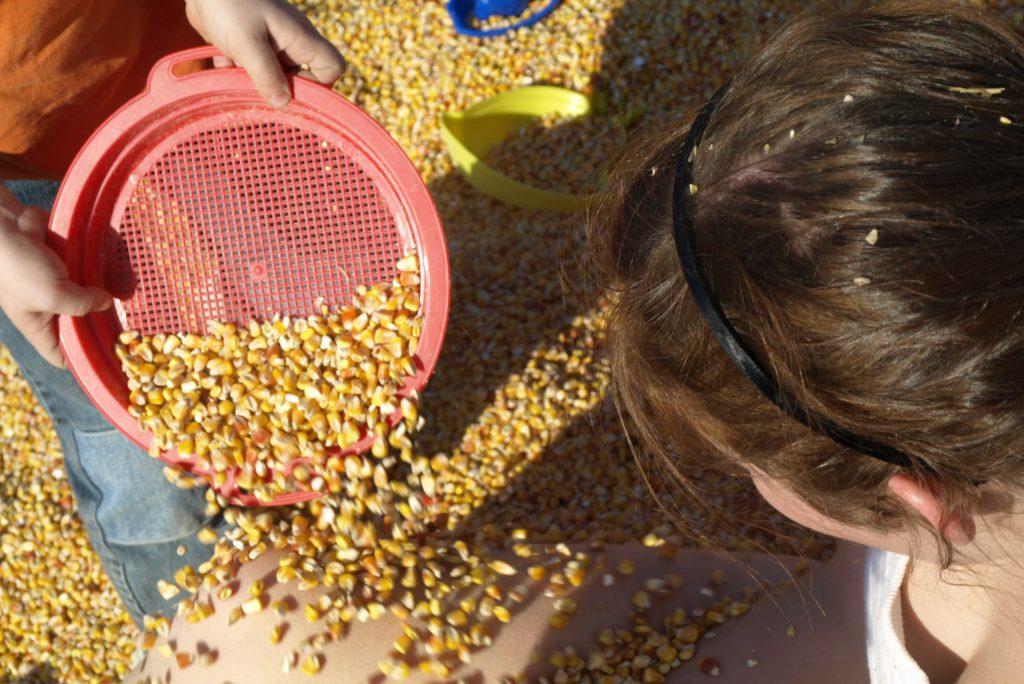 Kids playing in a corn sandbox